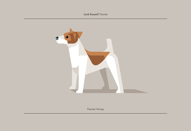 Jack Russell Terrier by Josh Brill