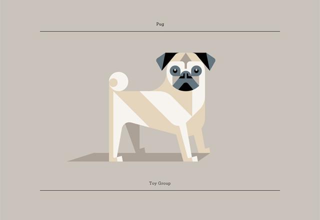 Pug by Josh Brill