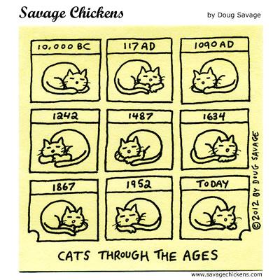 Cat History