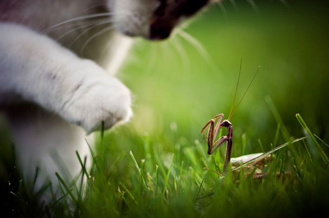 Cat and Mantis