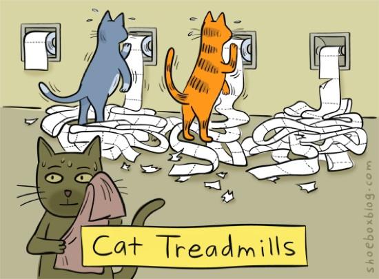 http://laughingsquid.com/wp-content/uploads/cat-treadmills-20110224-105831.jpg