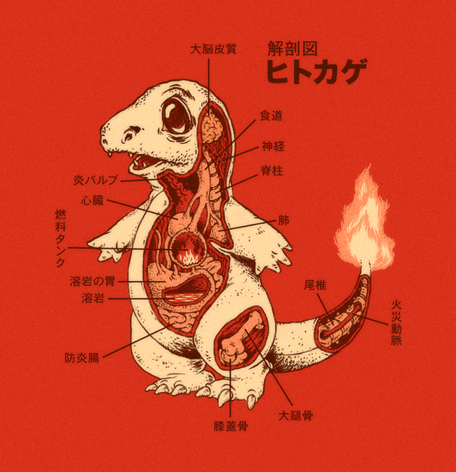 Charmander Anatomy by Ryan Mauskopf