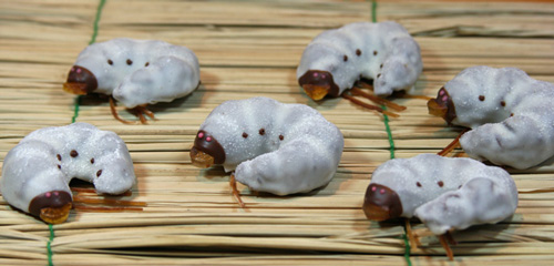 Larva Chocolate