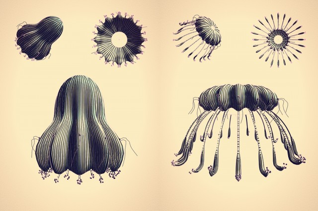 Line Drawing Jellyfish : Realistic jellyfish drawing at getdrawings free for personal