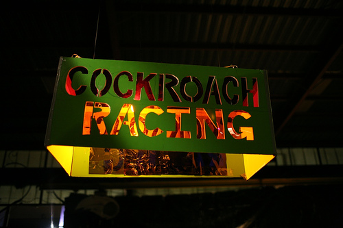 Cockroach Racing
