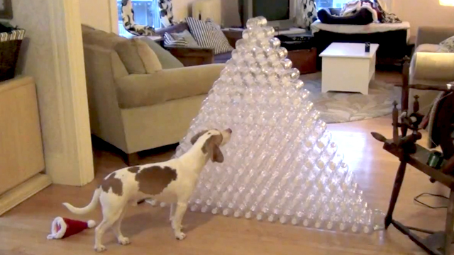 Dog Receives 210 Bottles for Christmas
