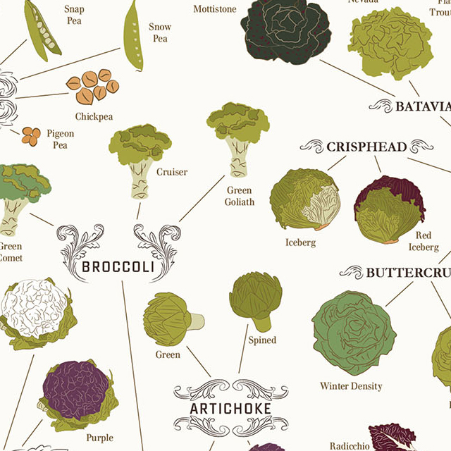 Varieties of Vegetables