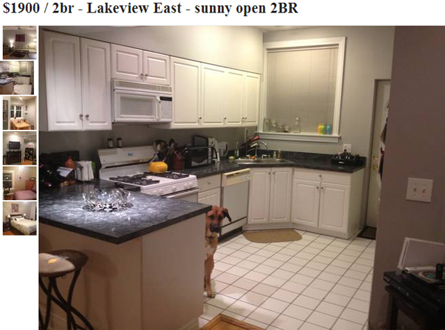 Dog Photobombs Craigslist