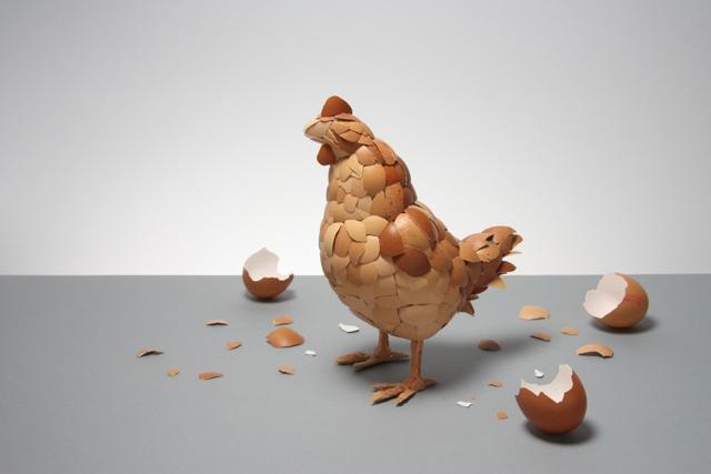 eggshell-chicken