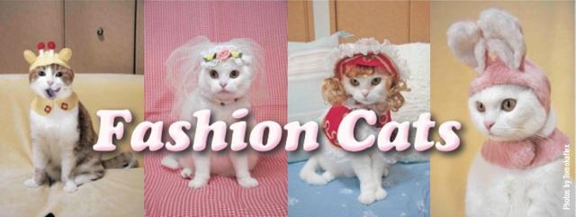 fashion-cats