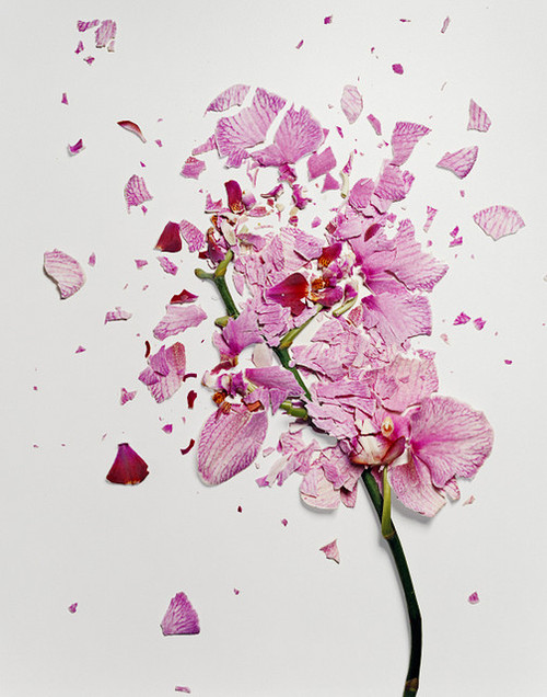 Smashed flowers by Jon Shireman