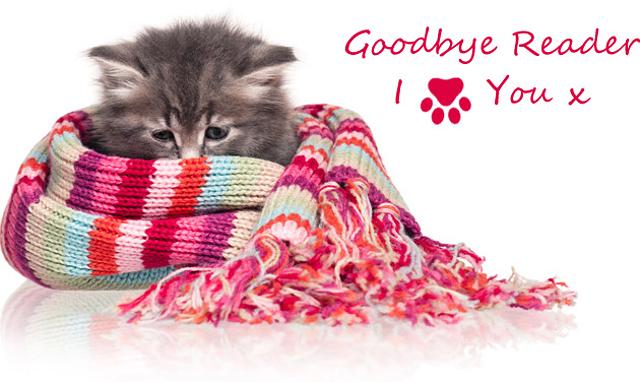 Google Reader Goodbye Kitty Cat Cat Cat