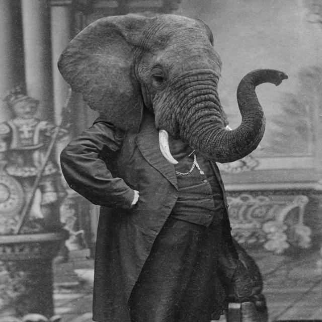 grand ole bestiary retro style prints of anthropomorphic