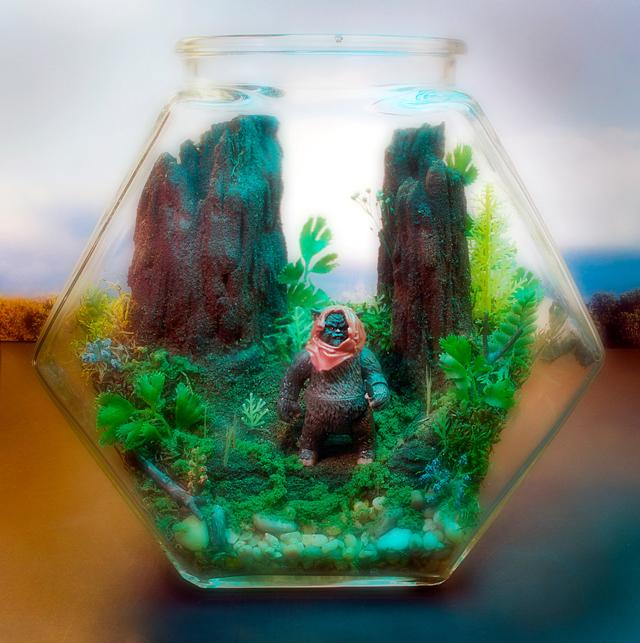 Ewok Terrarium - Star Wars - Forest of Endor by Tony Larson