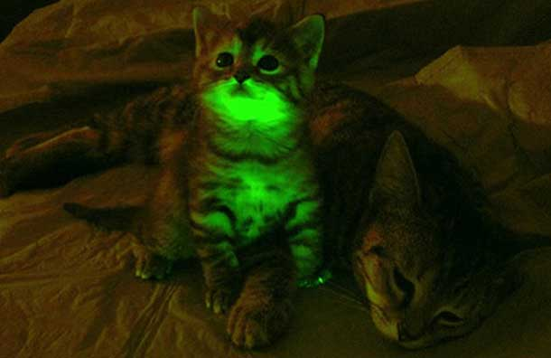 Glowing Kittens