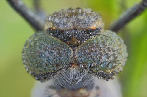 photographer that has a lovely series of close up shots of insects.