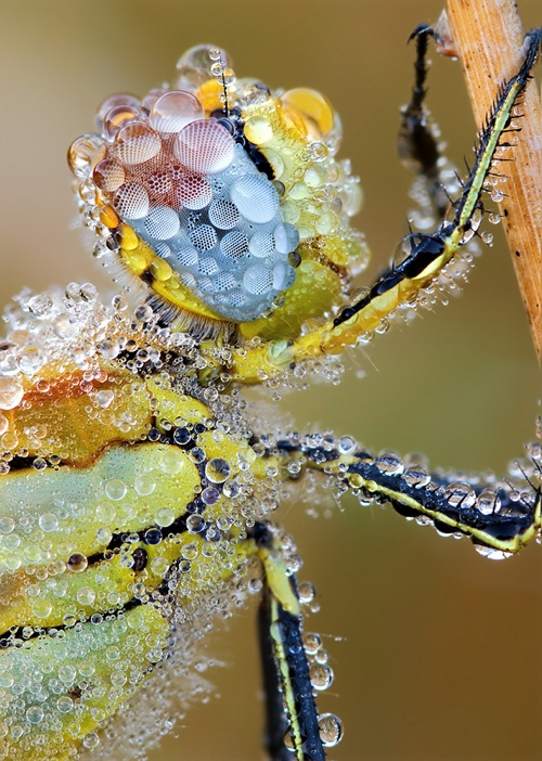 Insect in Morning Dew