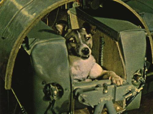 pes Lajka v Sputniku