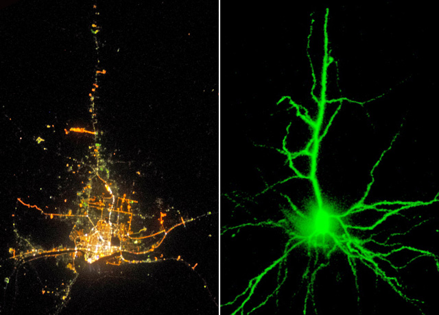 Neurons vs Cities