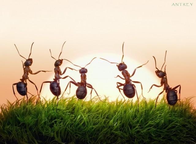 Fairy tale ant photos by Andrey Pavlov