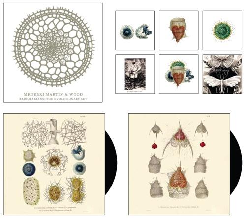 Radiolarians: The Evolutionary Set