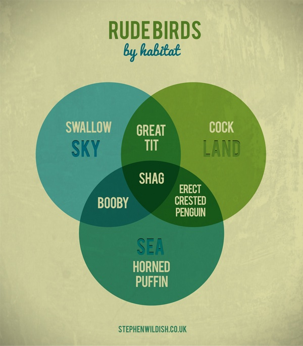 rude-birds