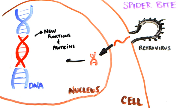 The Science of Superheroes - SPIDERMAN 2