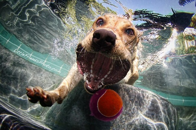 Incredible Photos of Dogs Underwater by Seth Casteel