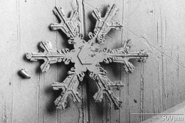images of snowflakes taken with an electron microscope