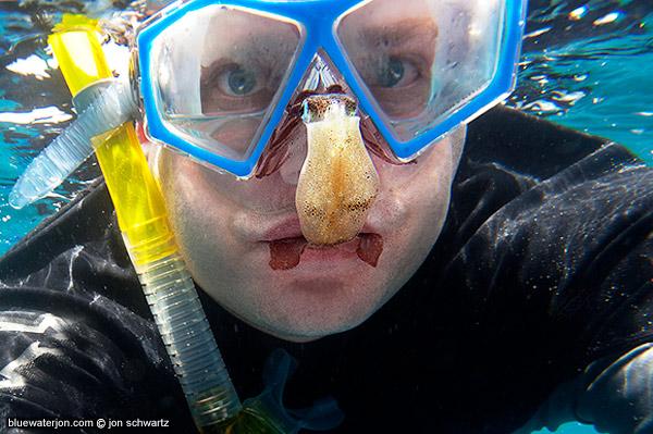 giant killer squid - photo #19