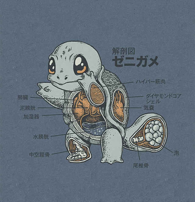 Squirtle Anatomy by Ryan Mauskopf