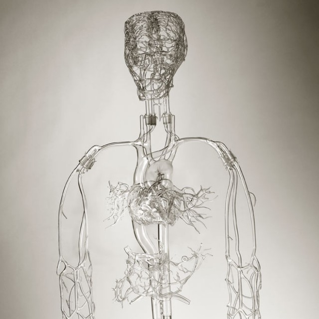 Glass Anatomical Models by Farlow's Scientific Glassblowing