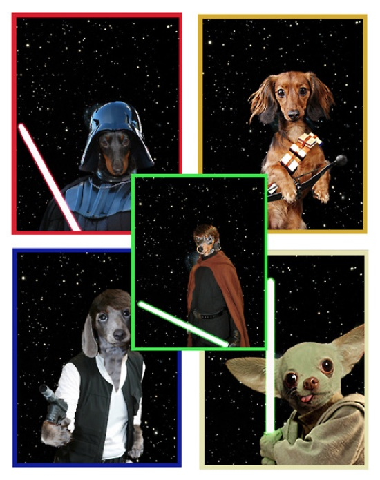 star-wars-dogs