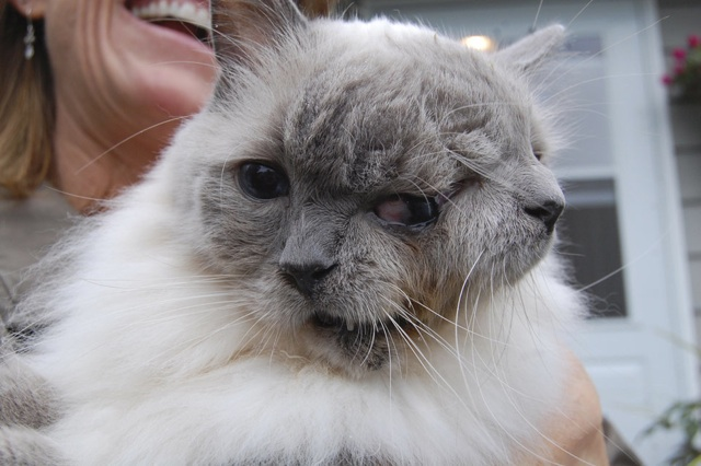 two-face-cat