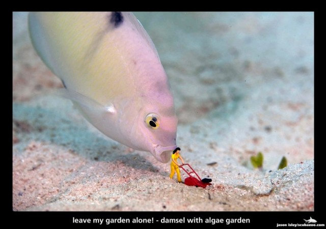 Underwater photos of miniatures interacting with marine life