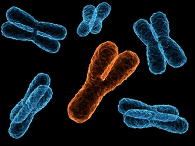y_chromosome